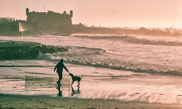 Andare in vacanza con animali domestici: tutto ciò che devi sapere